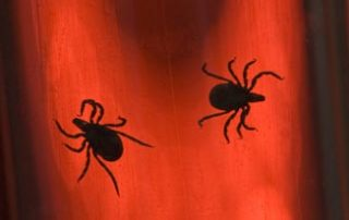 bed-bugs-removal-eradication-pest-control-costa-del-sol