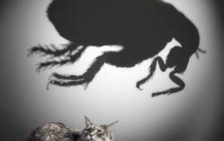 flea-removal-local-pest-control-malaga-coin