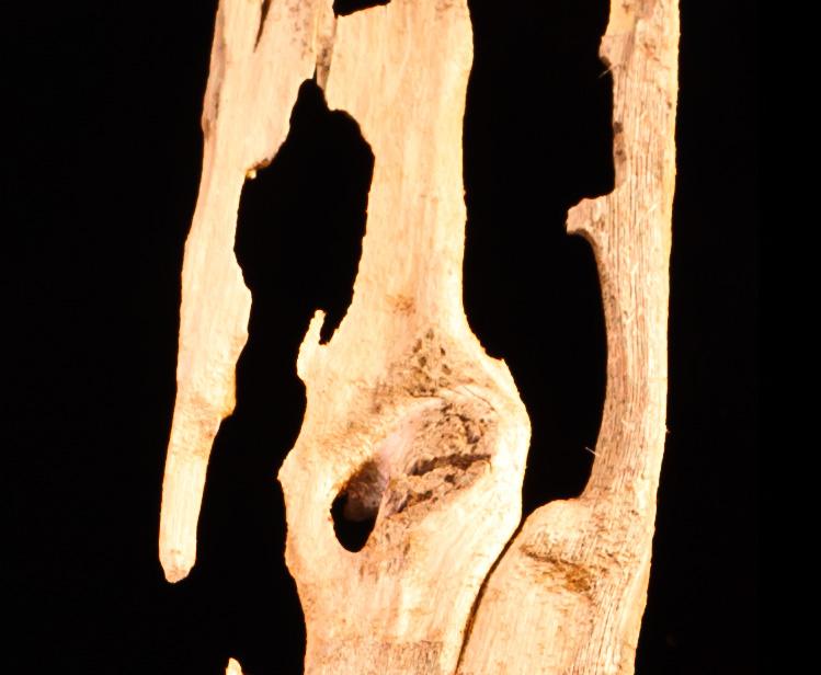 subterreanean-termites-local-pest-costa-del-sol