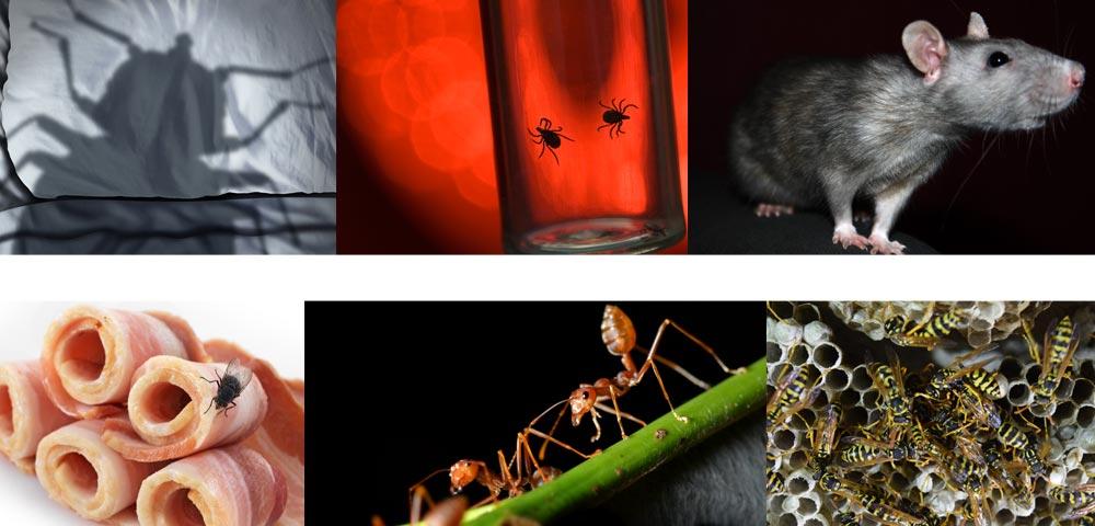 pest control costa del sol pest problems and pest eradication, local pest solutions