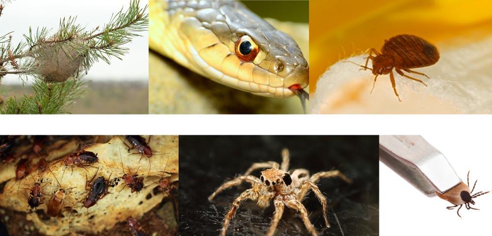 pest control eradication pest problems - Local Pest services costa del sol