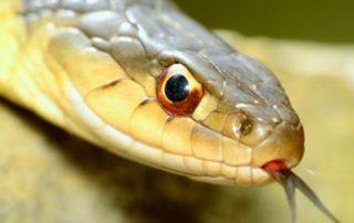 snake-removal-local-pest-control-costa-del-sol