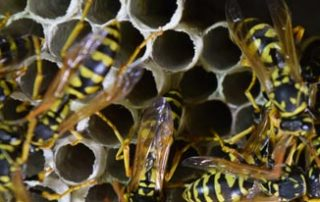 wasps-nests-removal-local-pest-control-estepona