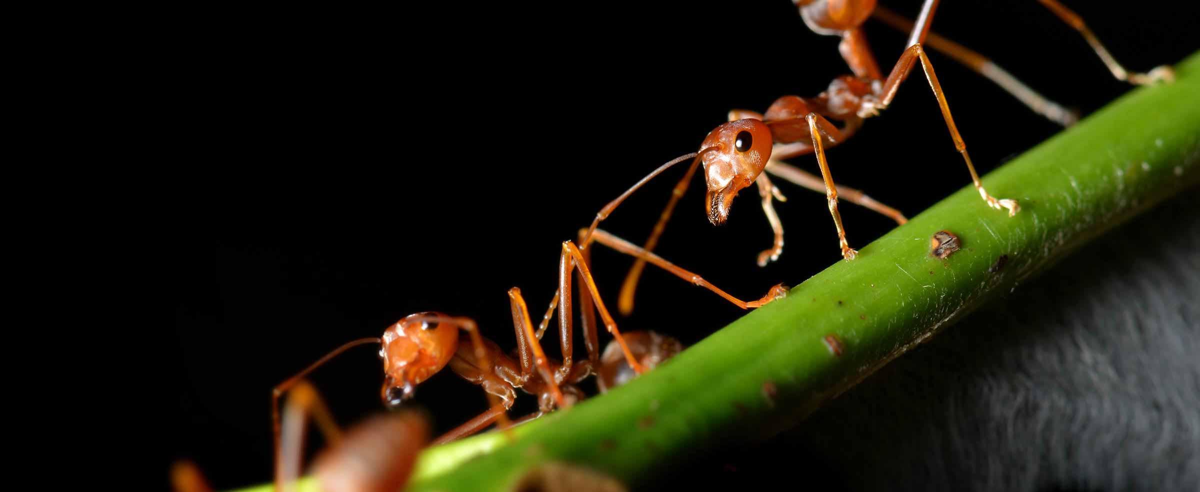 ant-pest-control-marbella-estepona